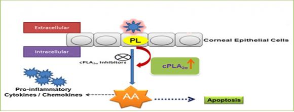 Liberação de ácido araquidônico membranar