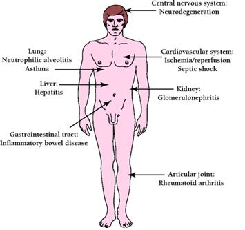 Desenho do corpo humano