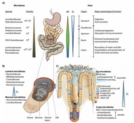 Processo do intestino