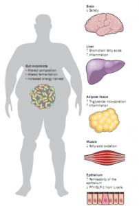 Relação microbiota e síndrome metabólica