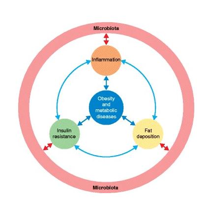 Relação entre microbiota e inflamação