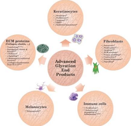 Efeitos dos AGEs sobre a derme