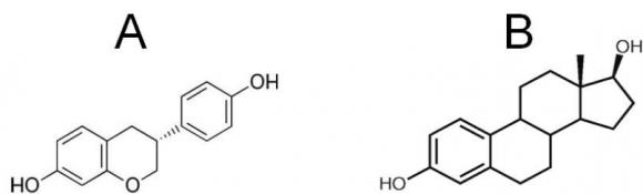 Equol e estradiol