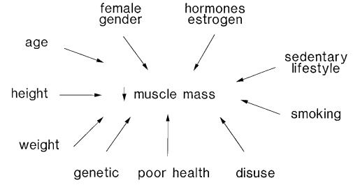 Mecanismo de ação de bodybalance™