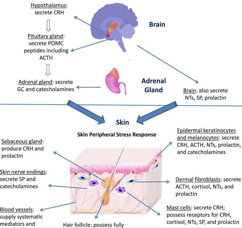 skin and brain