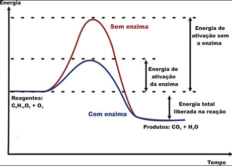 funcionalidade das enzimas