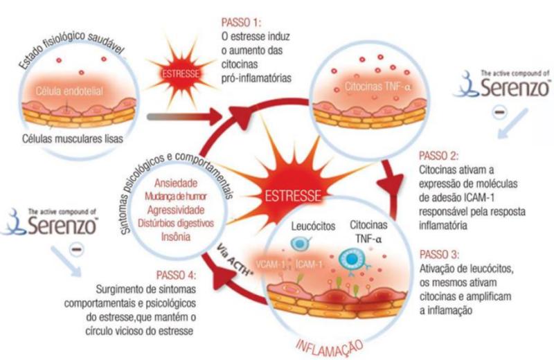 Serenzo sobre mediadores inflamatórios