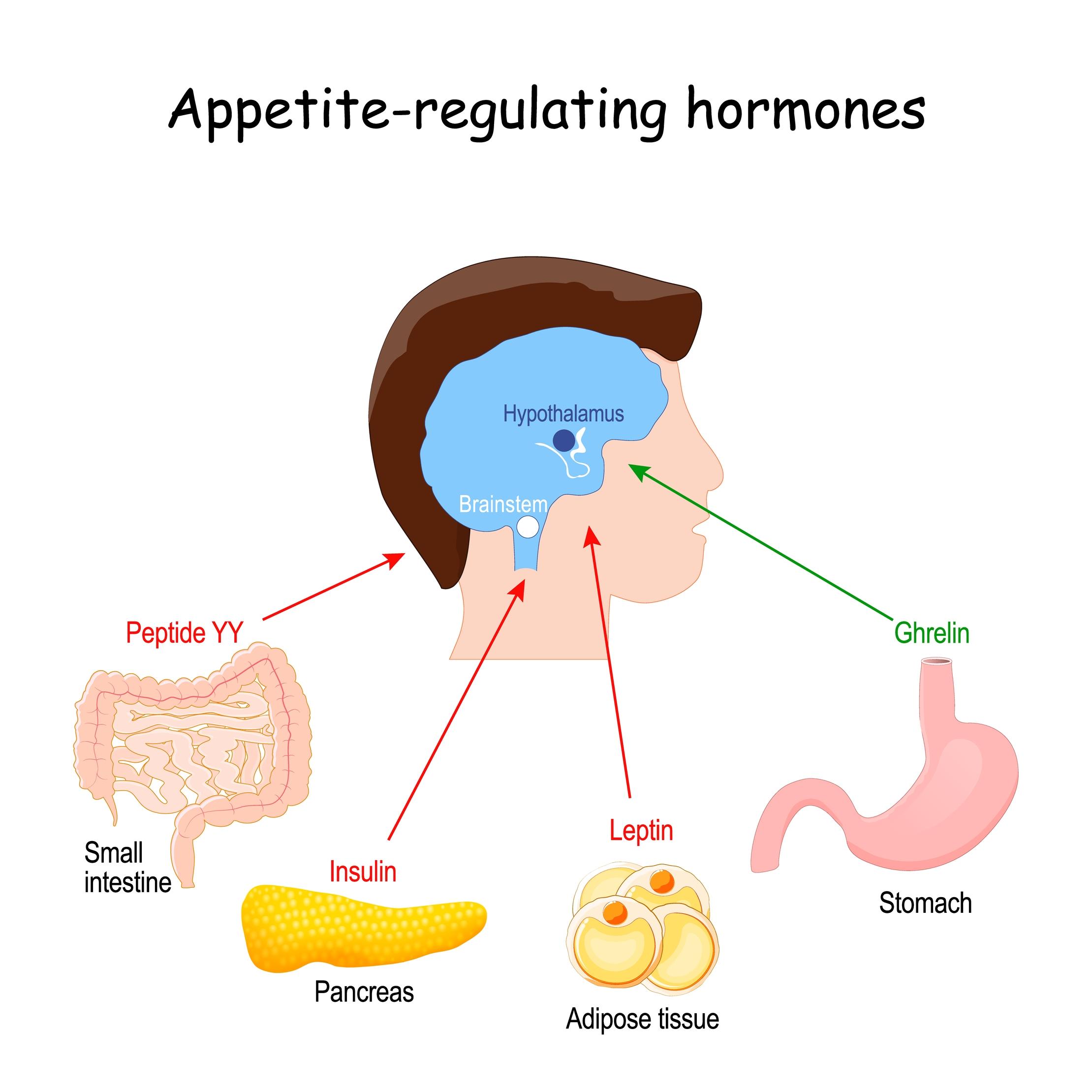 controle da fome e apetite