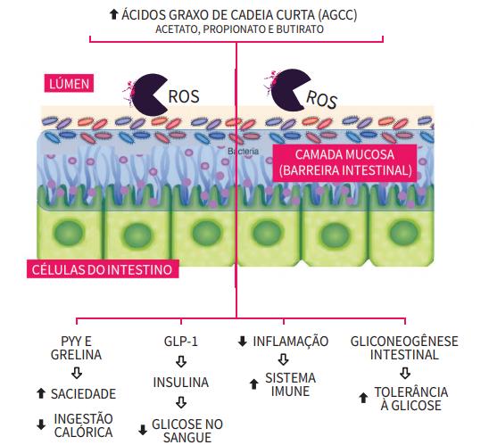 microbiomex e ácidos graxos de cadeia curta