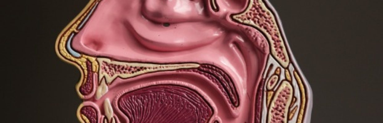 Protocolo Otorrinolaringologia