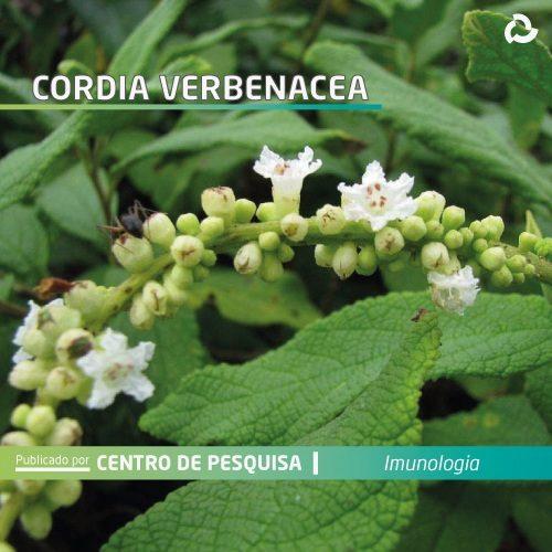 Cordia verbenacea - planta